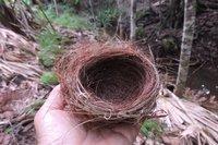 DSCN7082鳥の巣.jpg