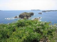 IMG_0484鰹鳥島とセンダン (002).jpg